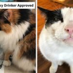 24 Things From Amazon Reviewers Say Please Their Picky Cats