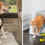 25 Things From PetSmart That'll Help Solve Even The Most Annoying Problems